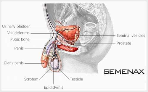 obat semenax, cepat hamil, cara cepat hamil, hamil, obat penyubur sperma