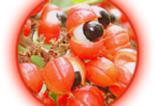 Bahan-Titan-Gel-guarana.png
