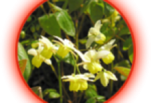 Bahan-Titan-Gel-epidium.png